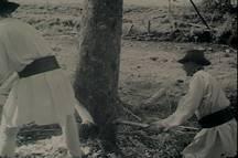Muncitori forestieri la faza de lucru de doborât